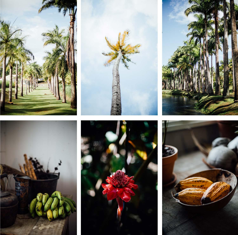 visiter habitation clément Martinique