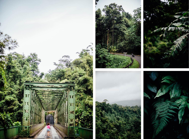 visiter le nord de la Martinique sauvage