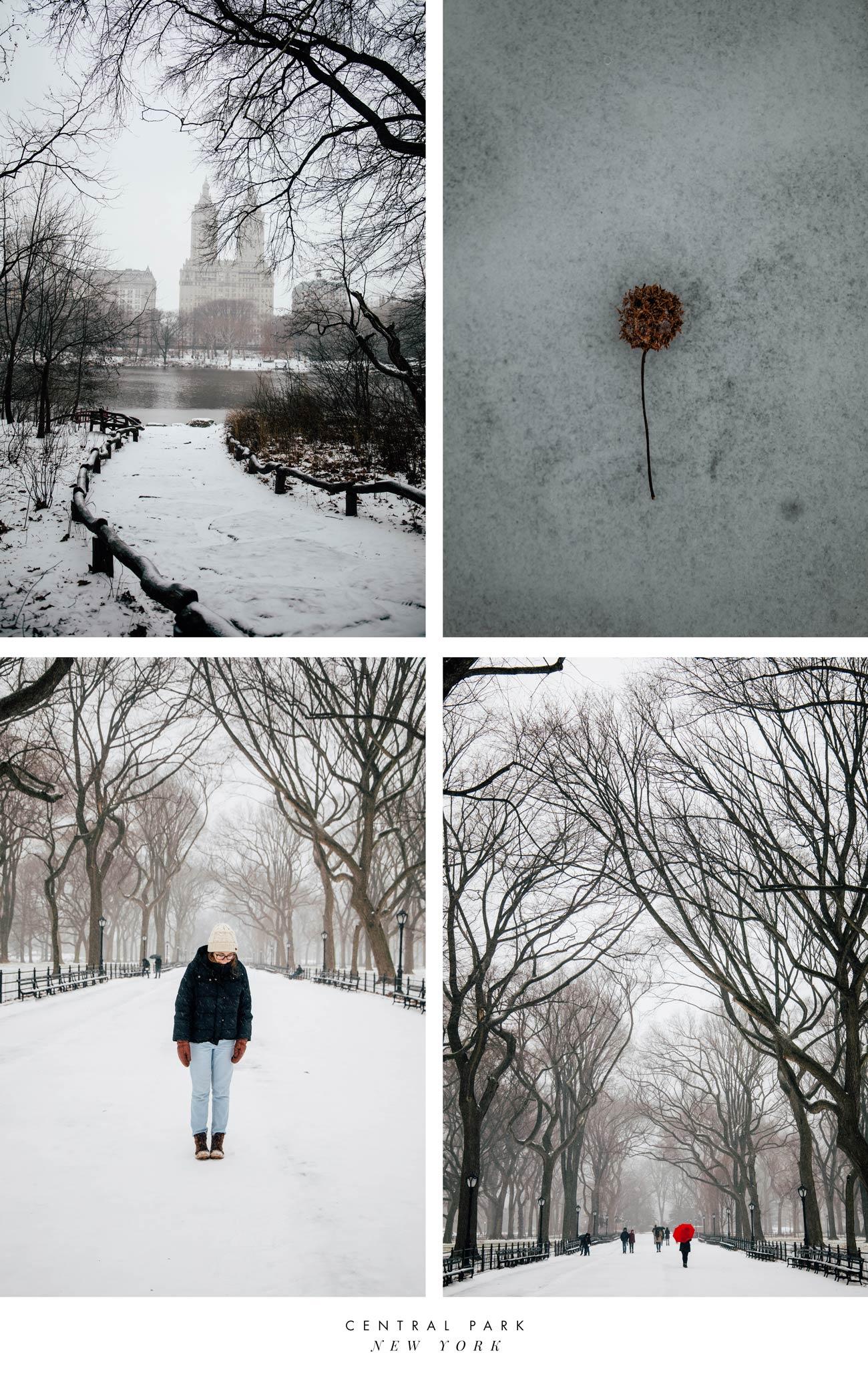 magnifique Central Park sous la neige
