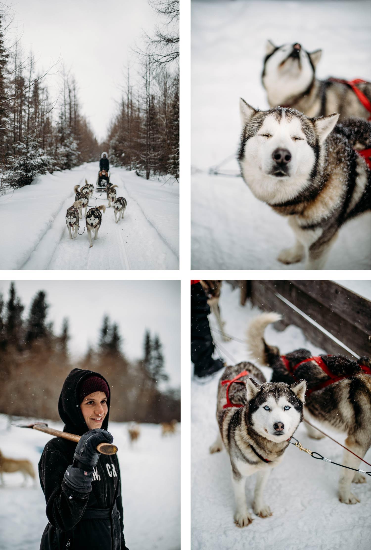 traineau à chiens Pourvoirie Daaquam