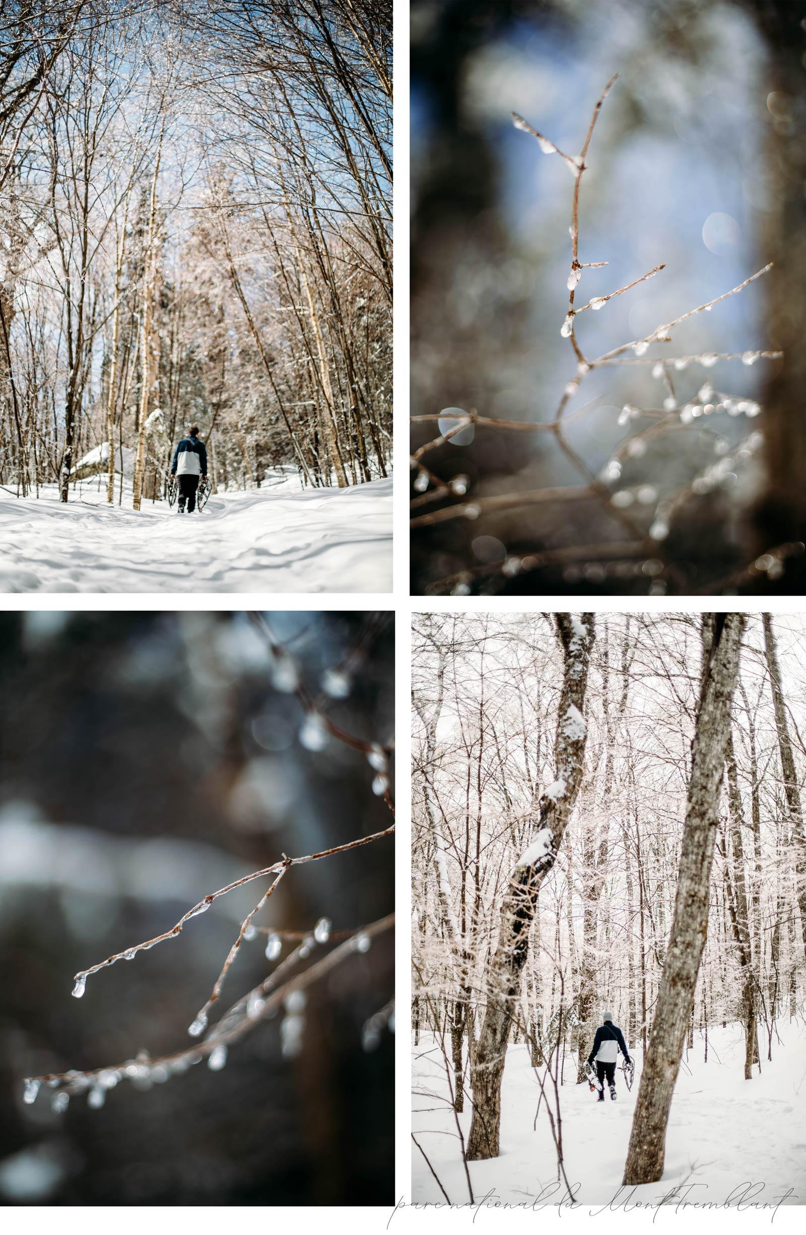 parc national du Mont-Tremblant en hiver