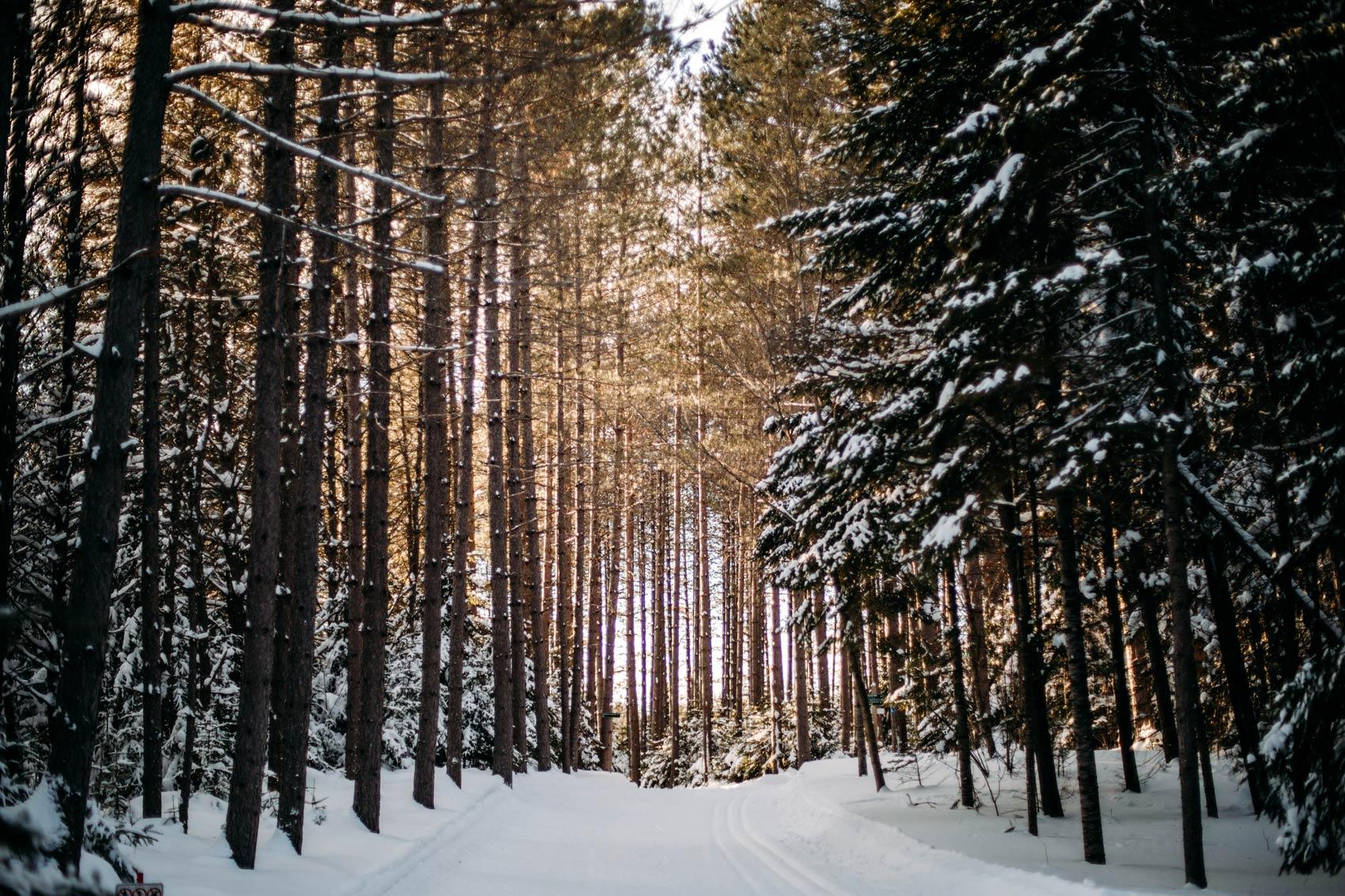 sentier ski de fond domaine Saint-Bernard