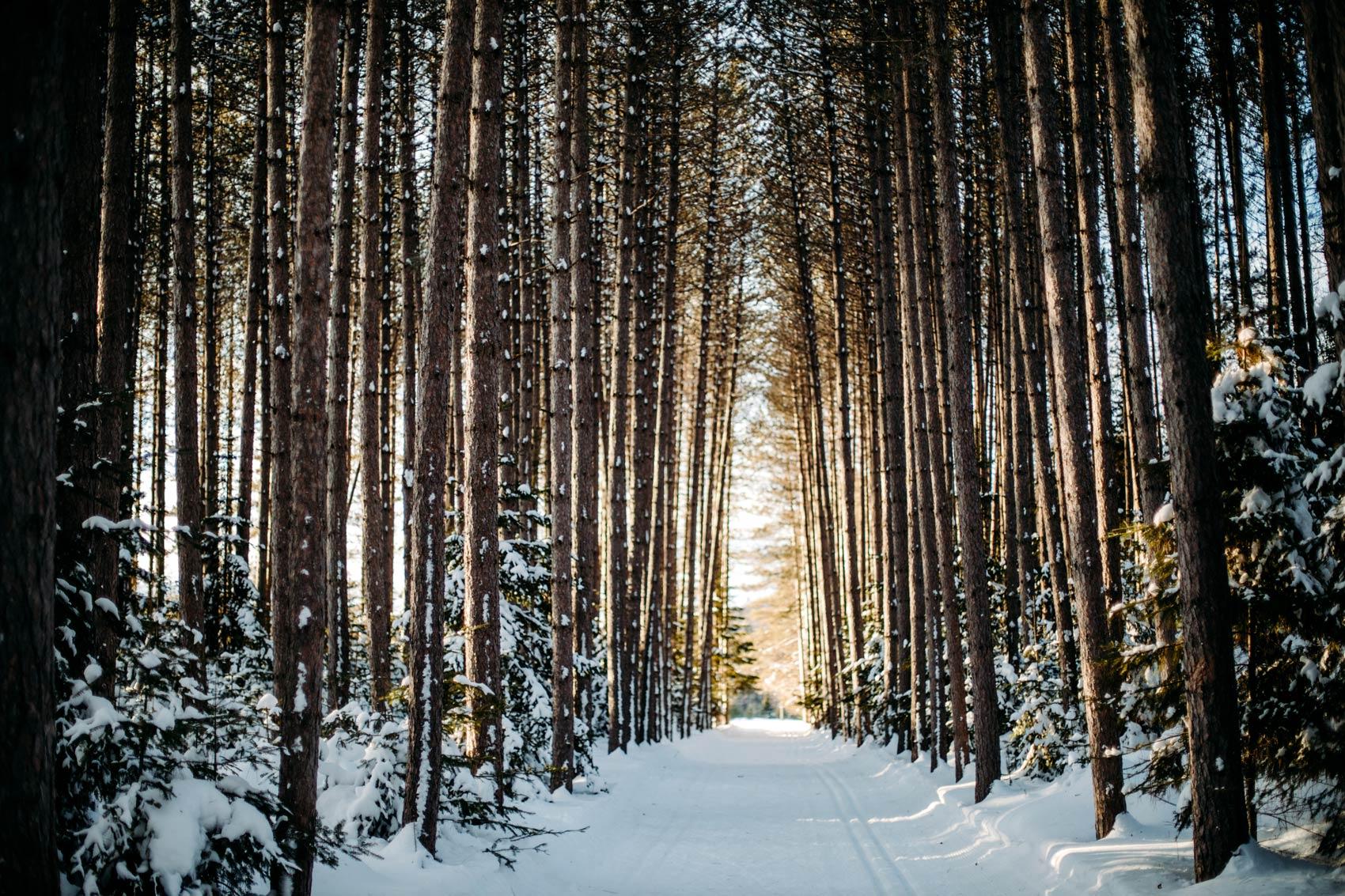 ski de fond dans Les Laurentides