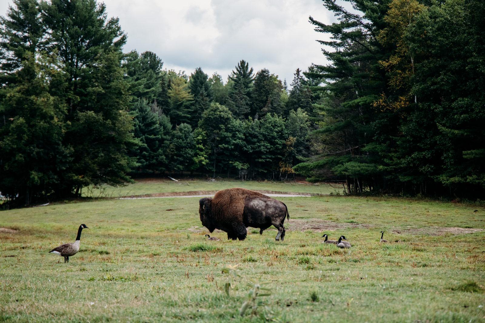 faune américaine parc oméga