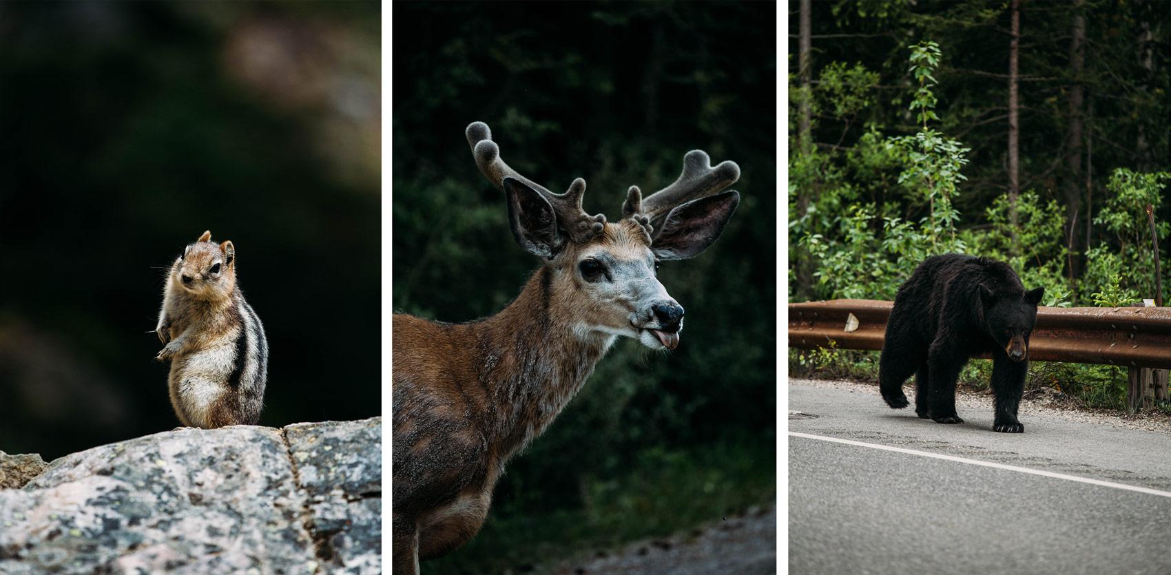 la faune sauvage dans l'ouest canadien