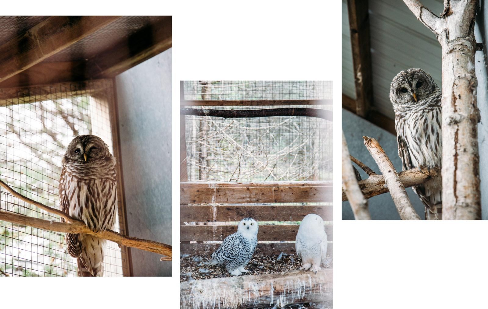 refuge animaux blessés en Abitibi