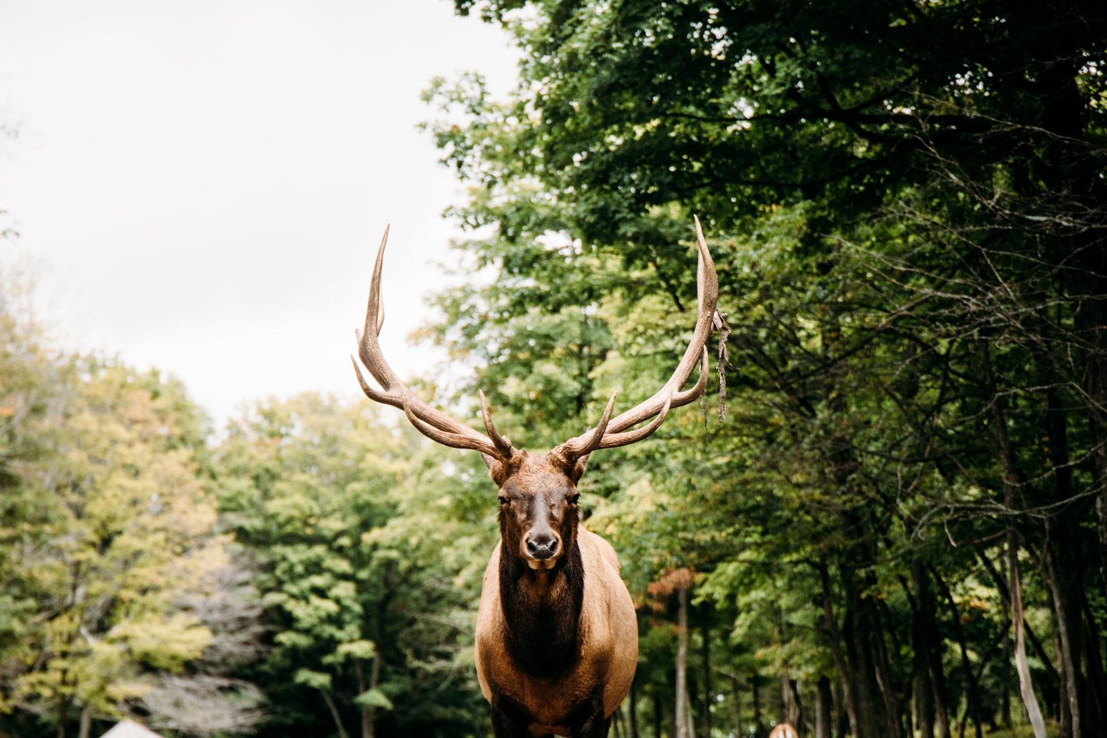 safari québec parc oméga