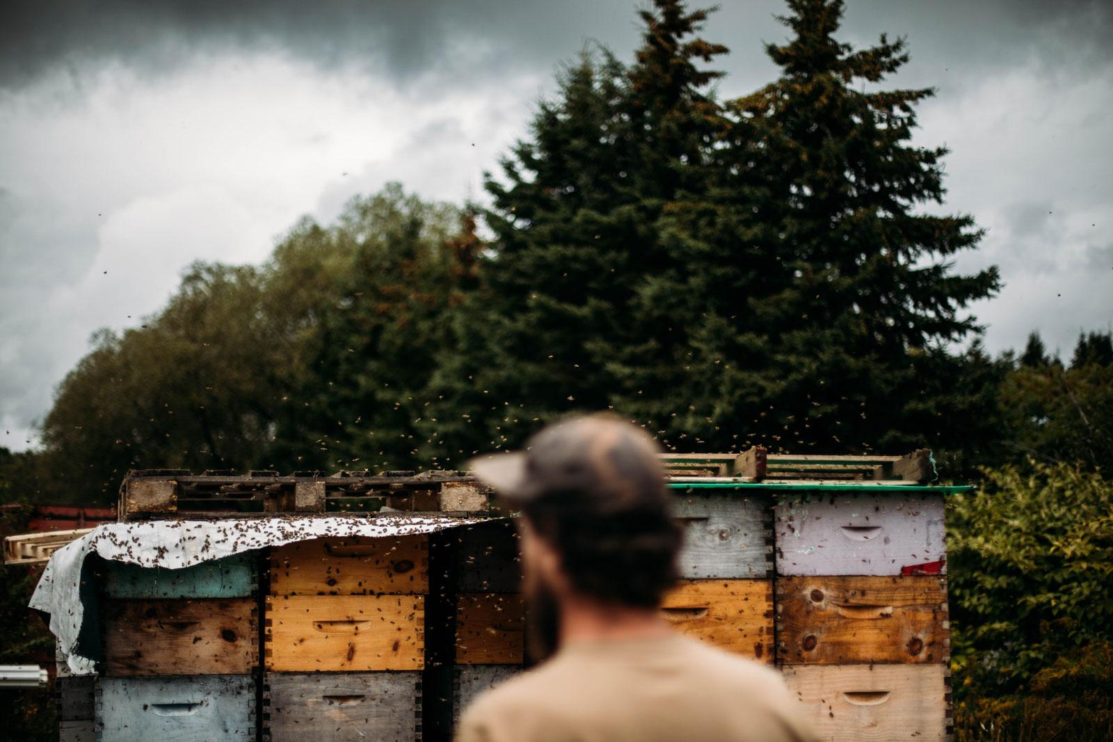 les miels d'anicet à Ferme Neuve