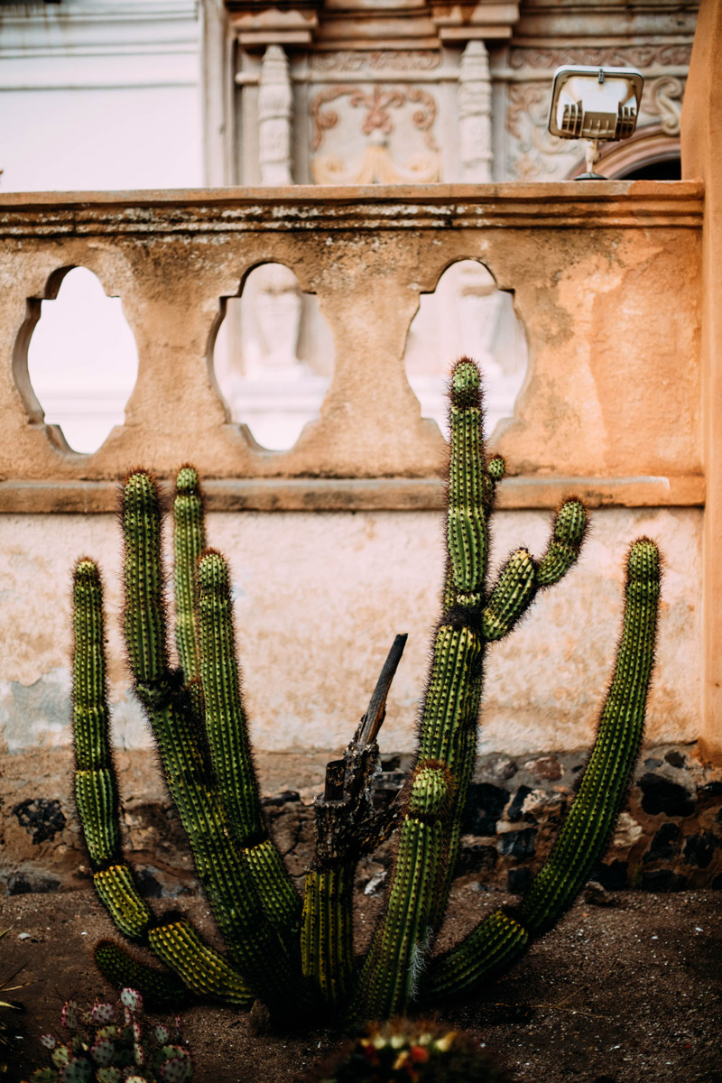 mission san Xavier del bac cactus
