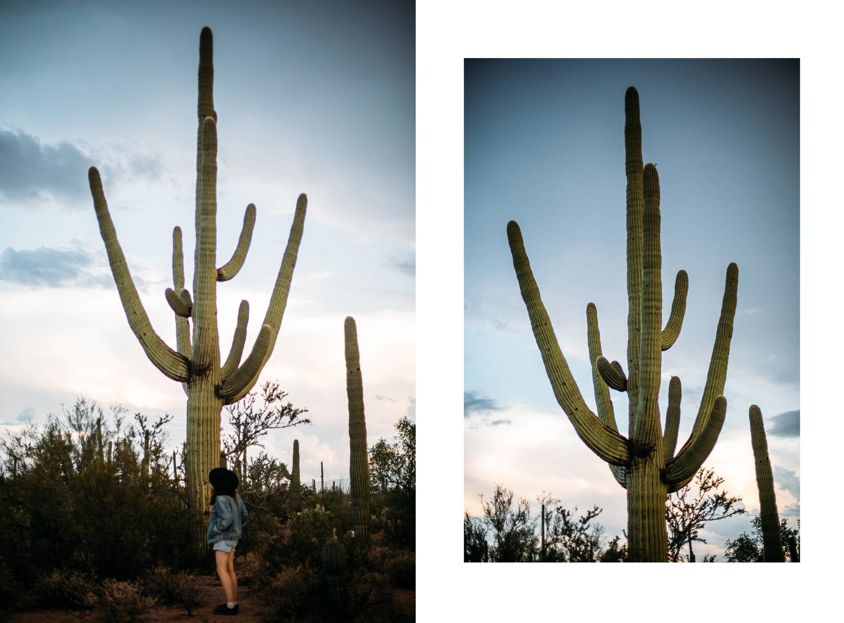 visiter le parc national Saguaro a Tucson