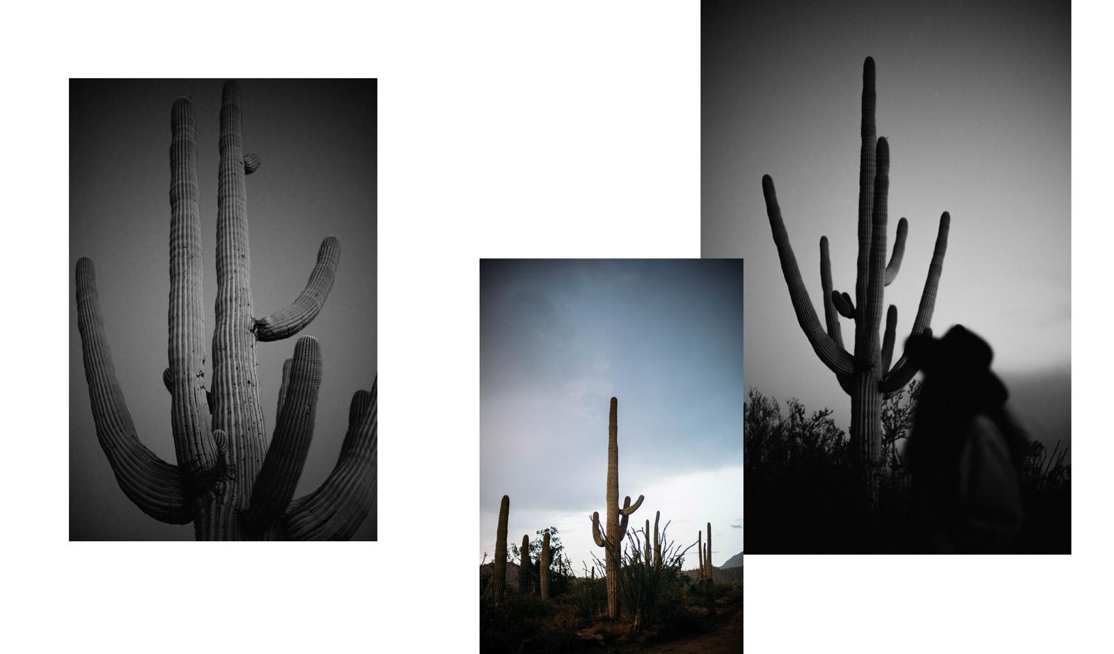visiter Tucson et le parc national Saguaro