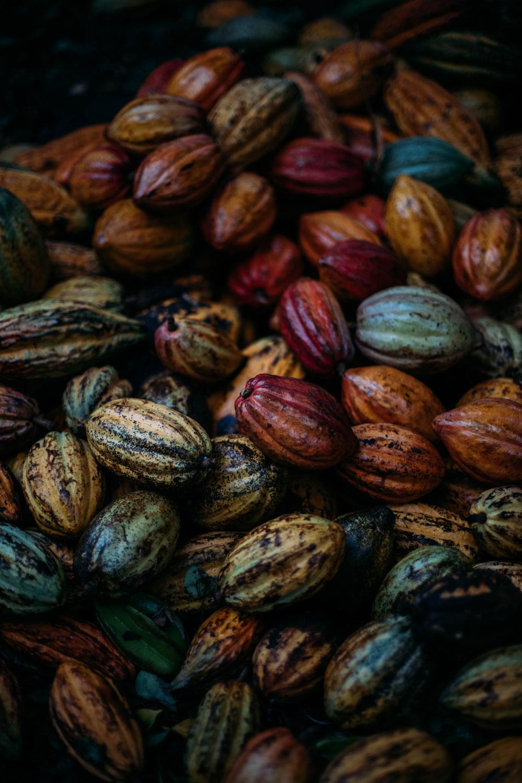 cabosses cacao Dominique