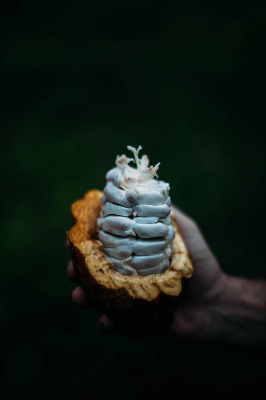 intérieur Cabosse cacao