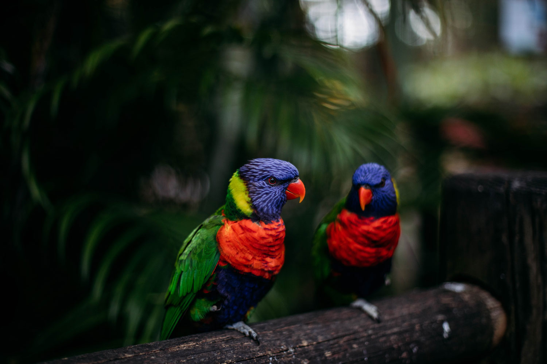 jardin botanique de Deshaies oiseaux