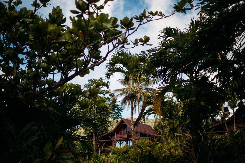 végétation du jardin malanga maison créole