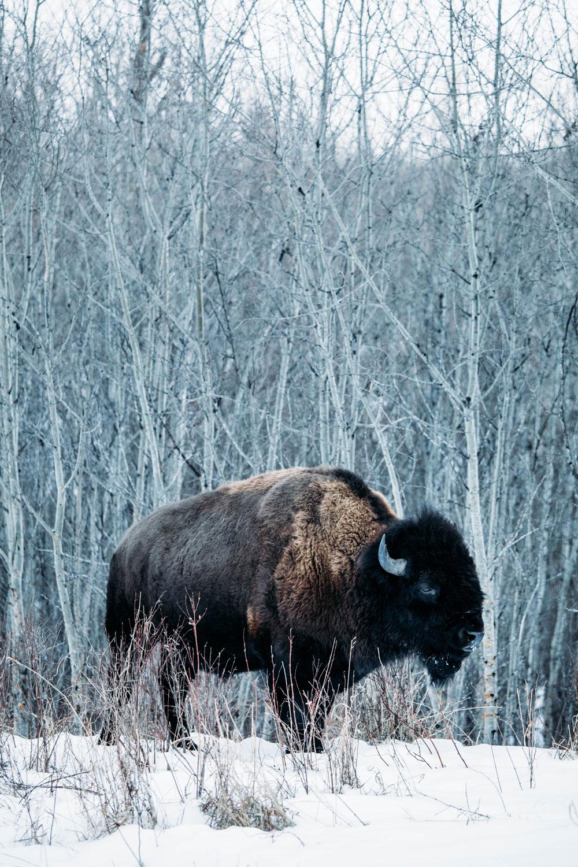 edmonton-canada-elk-island