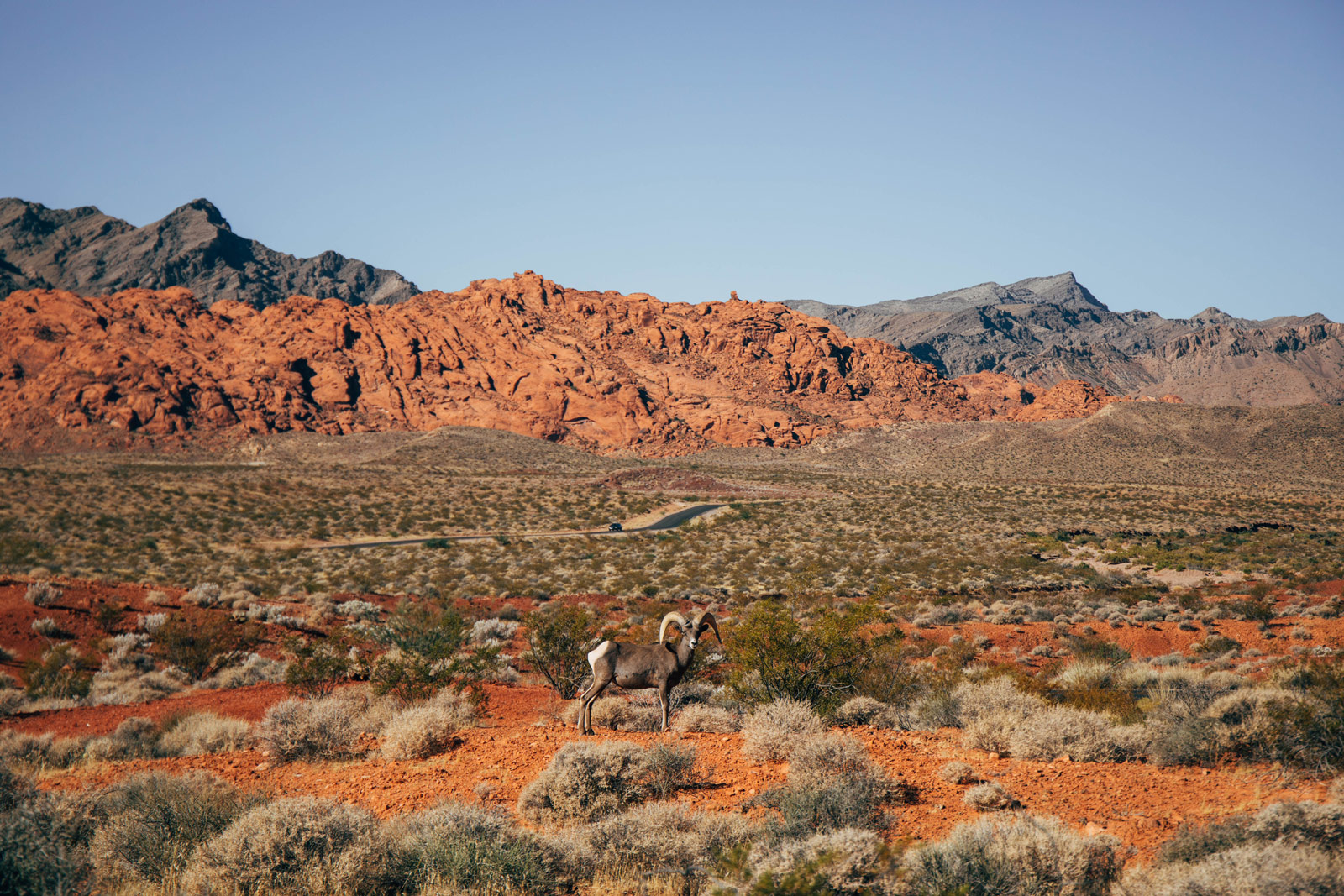 visiter-le-nevada-et-la-valley-of-fire