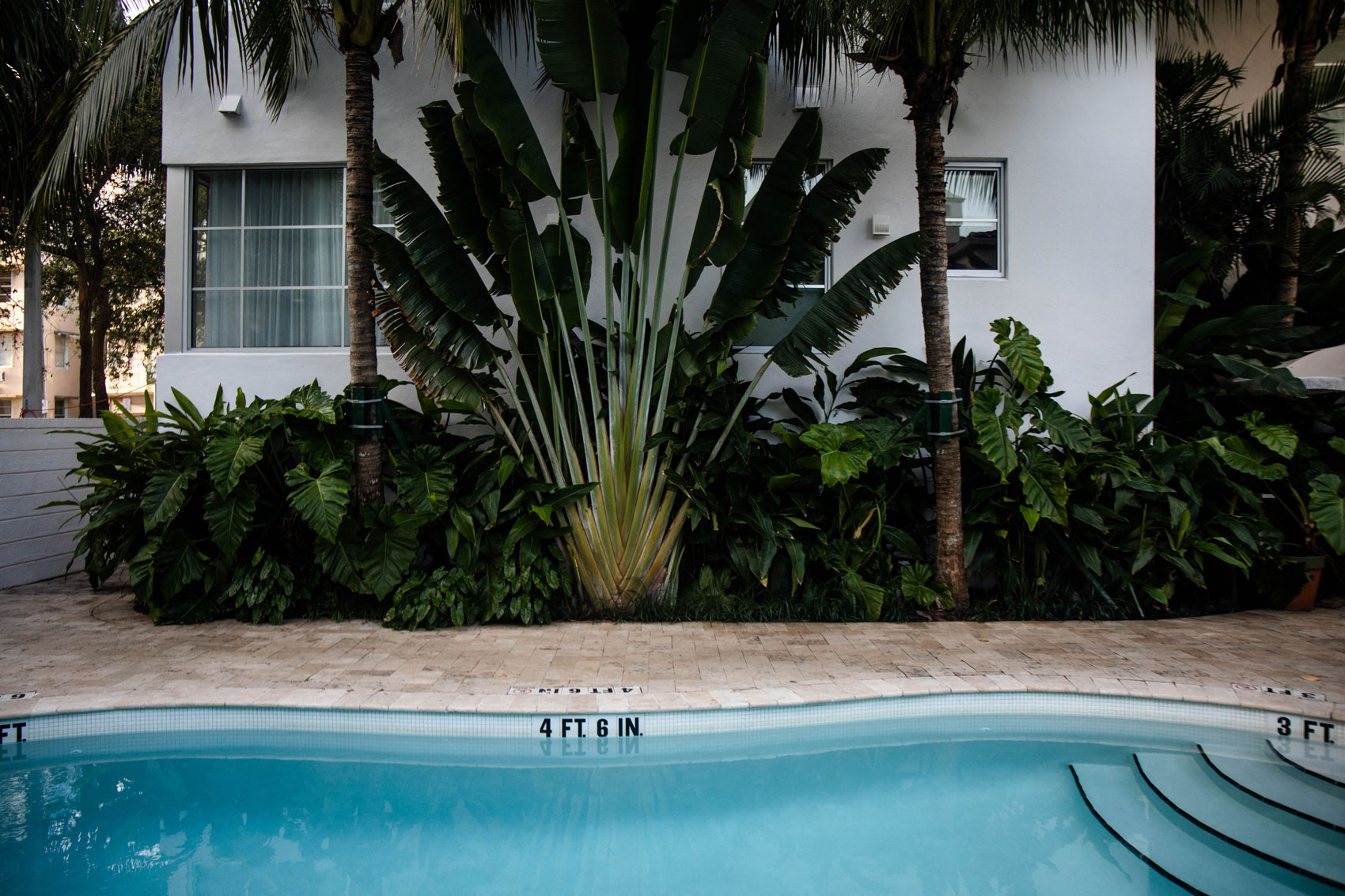 hotel-piscine-palihouse-miami-beach