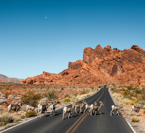 Nevada — le guide pour randonner à Valley of Fire State Park