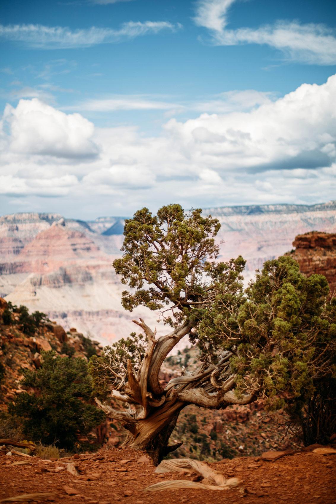 arbre solitaire Arizona ouest américain