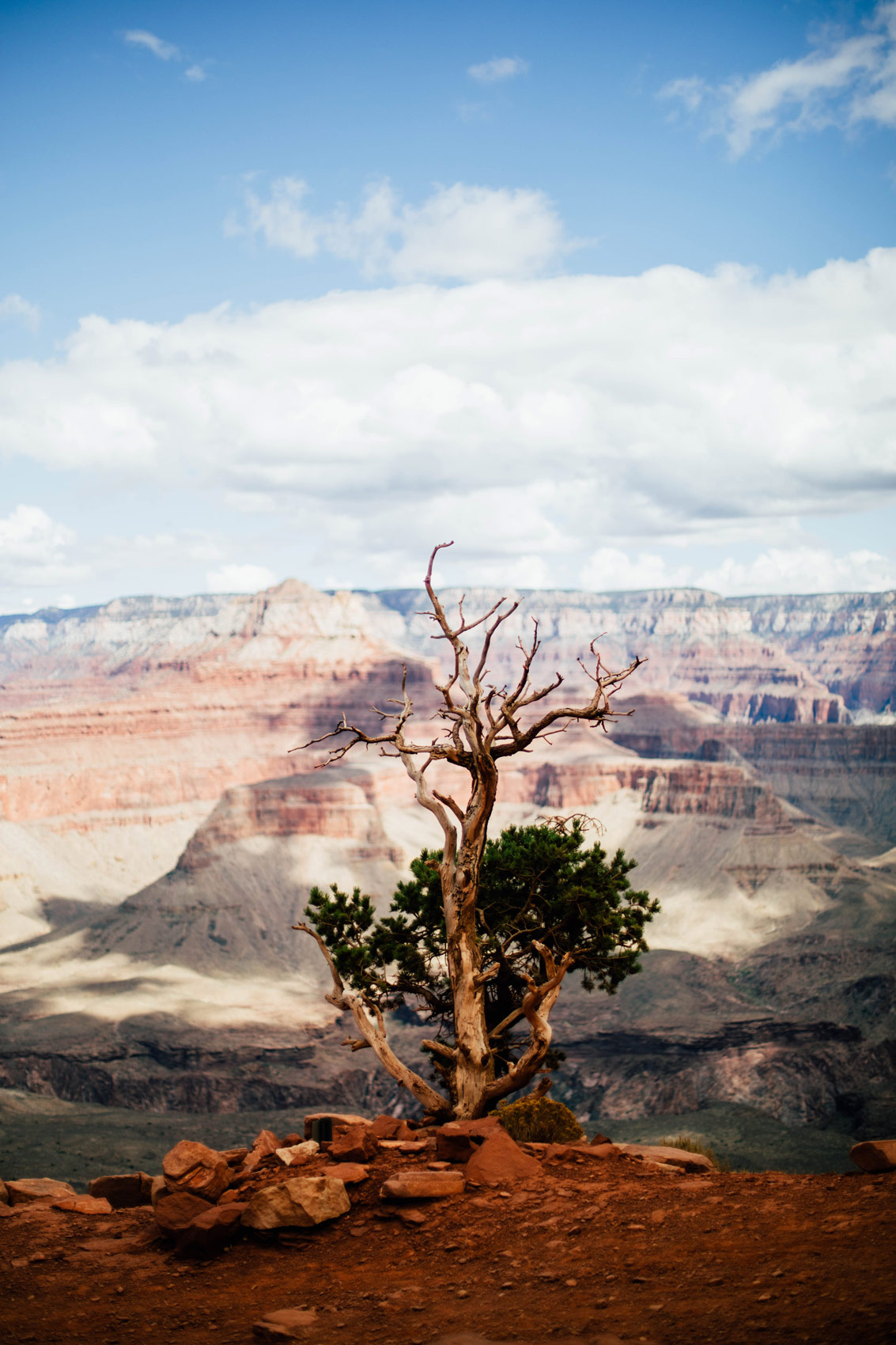 arbre solitaire grand canyon