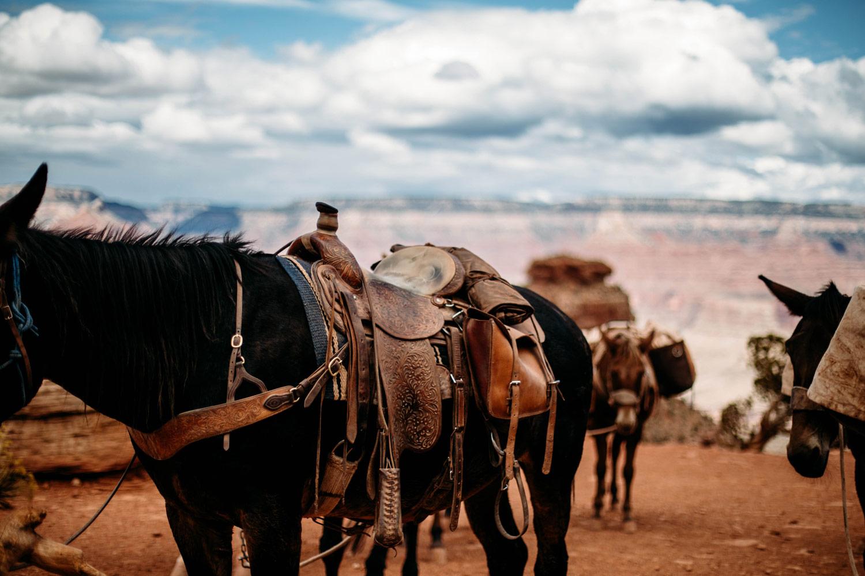 cowboy grand canyon