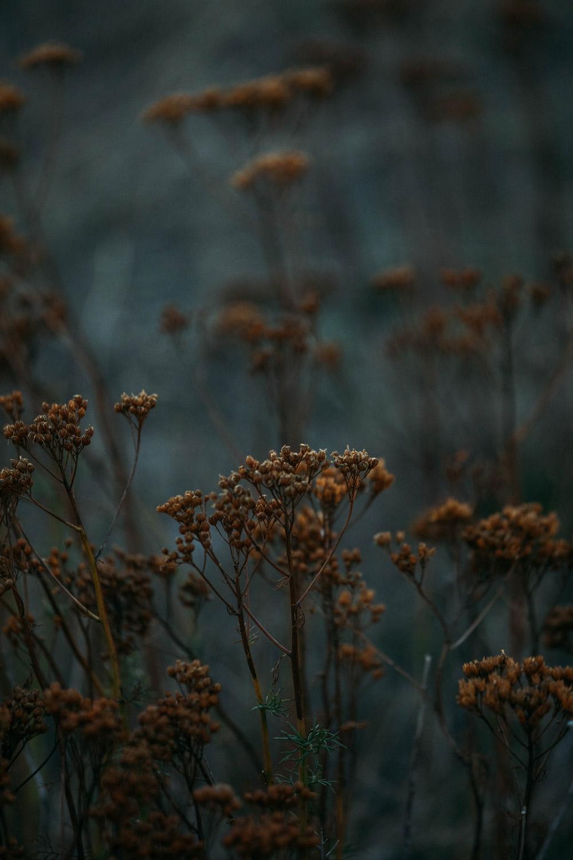 flore des Cévennes