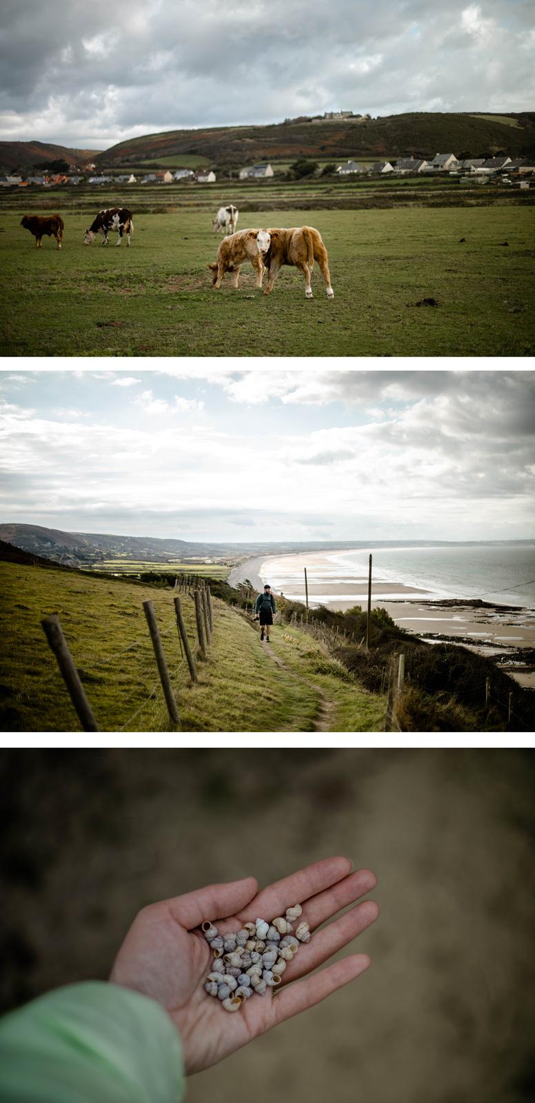 paysages du littoral du Cotentin : dunes de Biville
