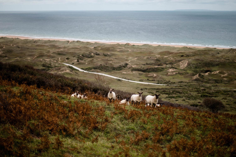 dunes de Biville dans le Cotentin