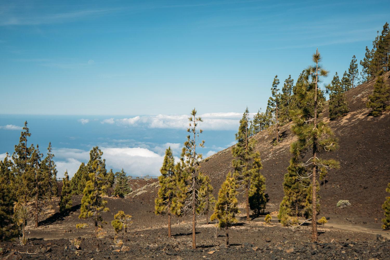 corona forestal au-dessus de la mer de nuages