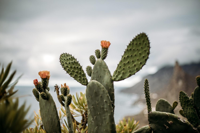 detail cactus parc rural anaga