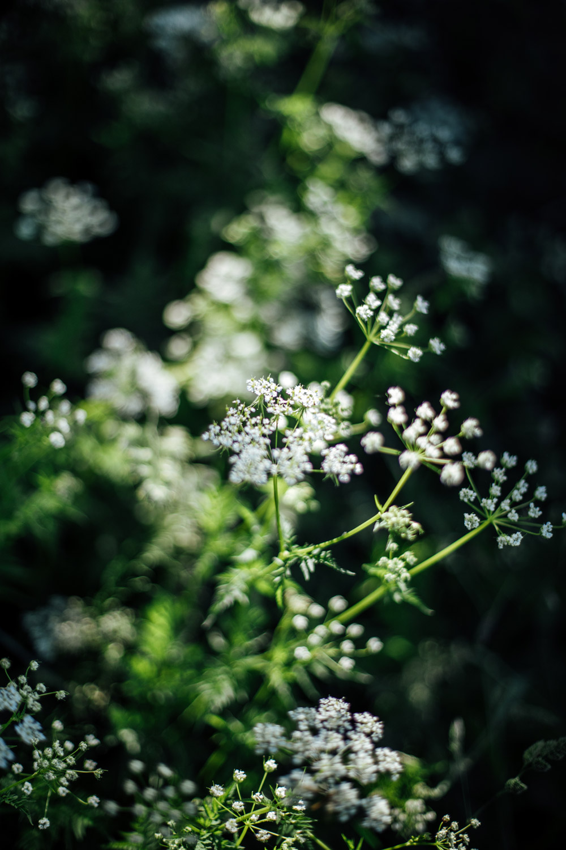 flore montagnes du jura