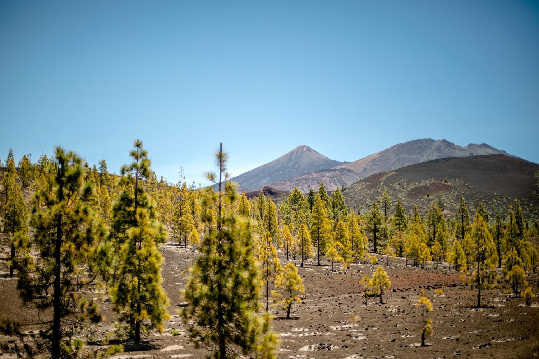 plus beaux paysages parc du teide Tenerife