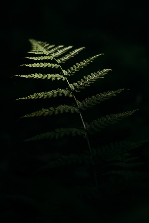 végétation montagnes du jura