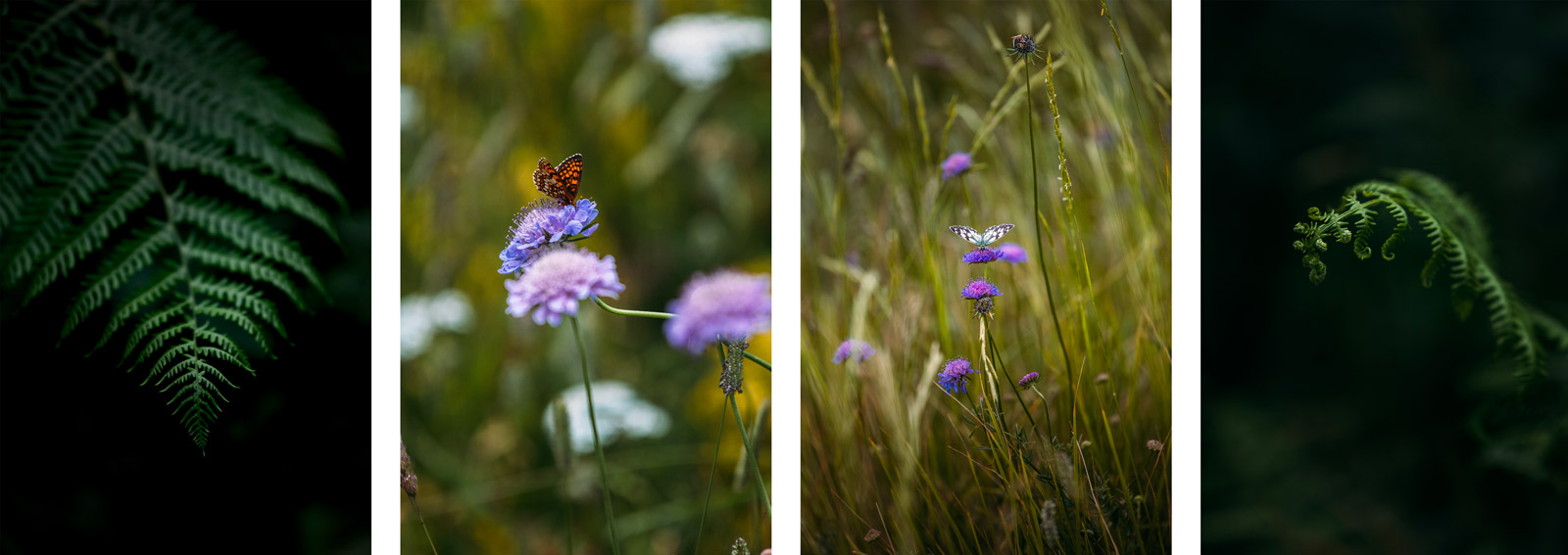 détail flore des pyrénées ariégeoises